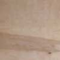 Birch wood species sample